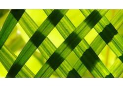 草,植物439815