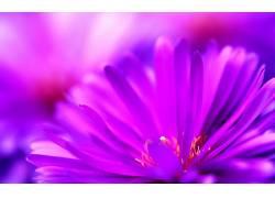 花卉181663