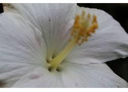 花卉,特写393411
