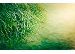草,植物56344图片
