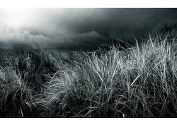 草,植物75655图片
