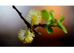 花卉181719