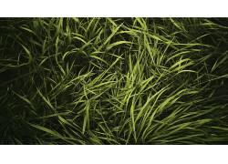 草,植物78210图片