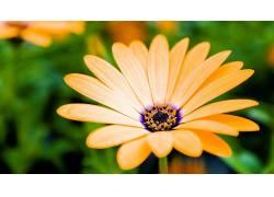花卉181759