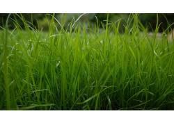 草,植物93589
