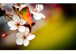 花卉181811