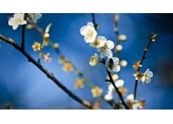 花卉181864