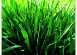 草,植物94128图片