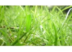 草,植物97962图片