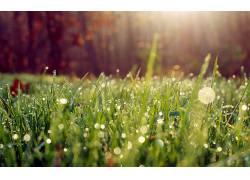 草,水滴,壁纸,植物27259图片