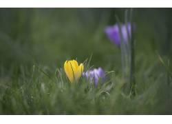 花卉182381