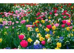 花卉182390