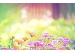 花卉182414