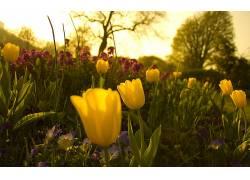 花卉182524