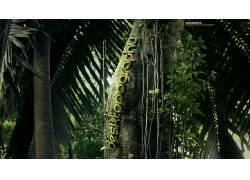 Desktopography,丛林,植物,树木,棕榈树,壁纸,数字艺术102271图片