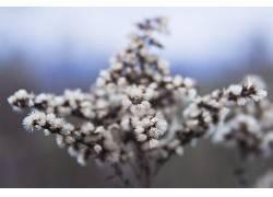 植物摄影作品