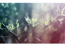 壁纸,树叶,景深,植物153640图片