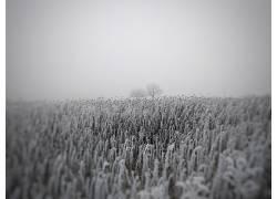 冬季,向日葵,树木,薄雾,领域,花卉562789