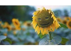 壁纸,树叶,特写,宏,植物,绿色,向日葵,笑脸,景深,种子359286图片
