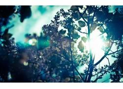 壁纸,树木,太阳,太阳光线,科,树叶,植物,阳光48671图片