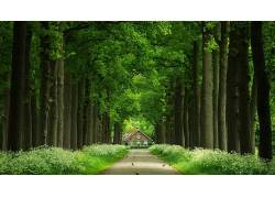 壁纸,树木,树叶,科,森林,木,屋,鸟类,路,草,植物256732图片