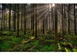 壁纸,树木,森林,太阳光线,太阳,植物,苔藓,薄雾235000