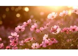 华美,壁纸,阳光,植物,花卉561146图片