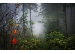 壁纸,树木,森林,木,植物,科,树叶,薄雾,阳光,秋季201003