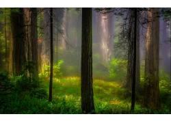 壁纸,树木,森林,木,植物,科,树叶,薄雾,阳光,草201004