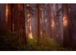 壁纸,树木,森林,木,植物,科,树叶,薄雾,阳光201005