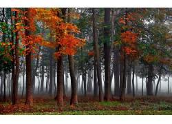 壁纸,树木,森林,木,薄雾,树叶,植物,科,华美,秋季,草202477