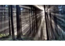 壁纸,树木,森林,木,薄雾,树叶,植物,科,太阳光线,HDR,轮廓,草2024图片