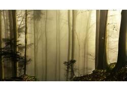 壁纸,树木,森林,木,薄雾,树叶,植物,科,苔藓202478