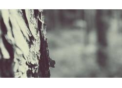 单色,树木,景深,冬季,宏,雪,植物24689图片
