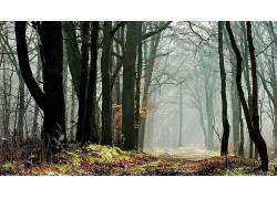 壁纸,树木,森林,树叶,秋季,植物,路径,太阳光线,科,薄雾187985