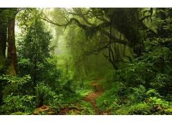 壁纸,树木,森林,树叶,藤本植物,薄雾,苔藓,路径,植物,蕨类植物,雨