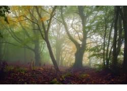 壁纸,树木,森林,植物,树叶,科,秋季,薄雾207182