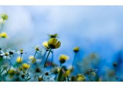 壁纸,宏,景深,花卉,植物16392图片