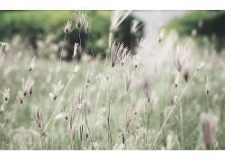 壁纸,宏,植物,景深,静音231158图片