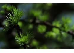 壁纸,宏,植物,景深29226图片