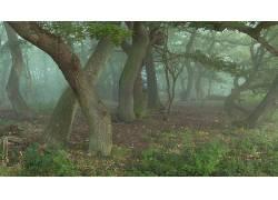 壁纸,树木,森林,科,树叶,木,薄雾,草,植物269093