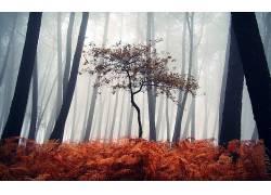 壁纸,树木,森林,薄雾,木,树叶,植物,蕨类植物,秋季,轮廓187249