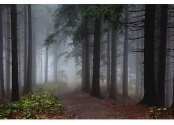 壁纸,树木,森林,薄雾,木,树叶,植物,路径,秋季,泥路187250