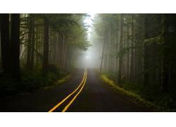 壁纸,树木,森林,薄雾,路,植物,草,科,线,丘陵267609