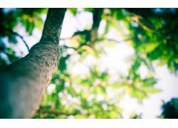 壁纸,树木,背景虚化,蠕虫的眼睛视图,植物21830图片