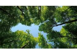 壁纸,树木,蠕虫的眼睛视图,植物,绿色,蓝色137023图片