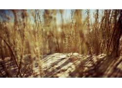 壁纸,砂,景深,植物65051图片
