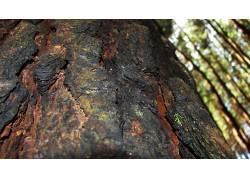 壁纸,森林,树木,树叶,植物,树皮,宏625644图片