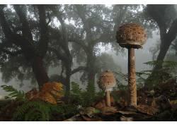 壁纸,森林,树木,蘑菇,树叶,薄雾,特写,蕨类植物,落叶,植物646741
