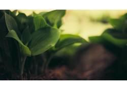 壁纸,宏,景深,树叶,植物48696图片